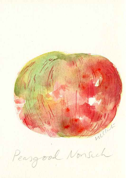 Peasgood Nonsuch Apple Watercolour -