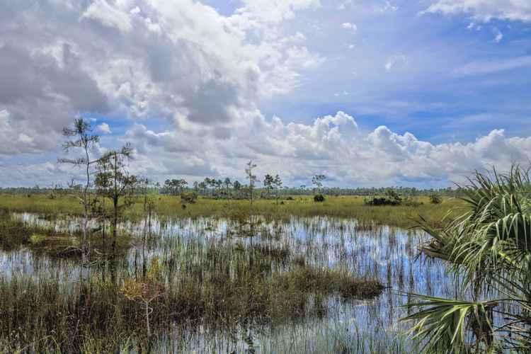 Everglades landscape -