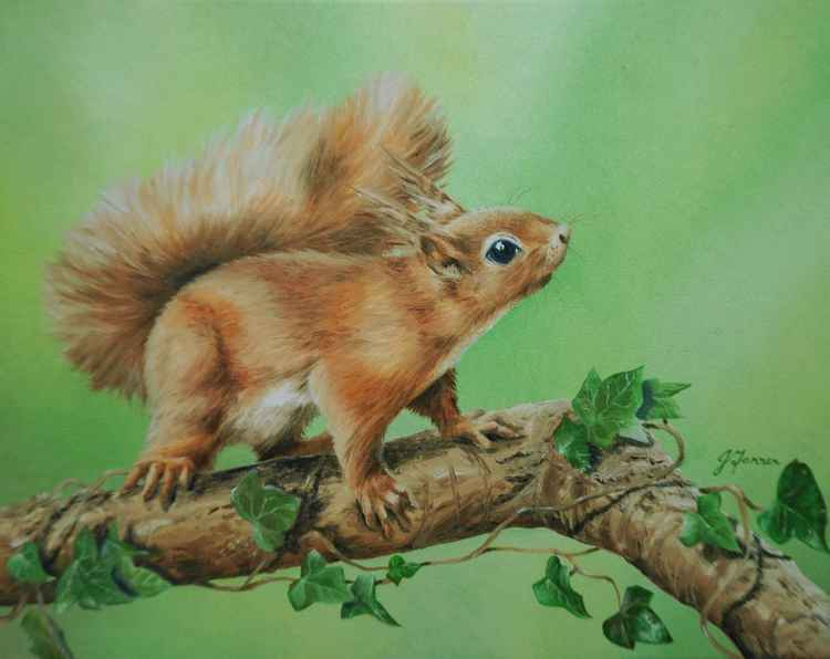 Red Squirrel with Ivy