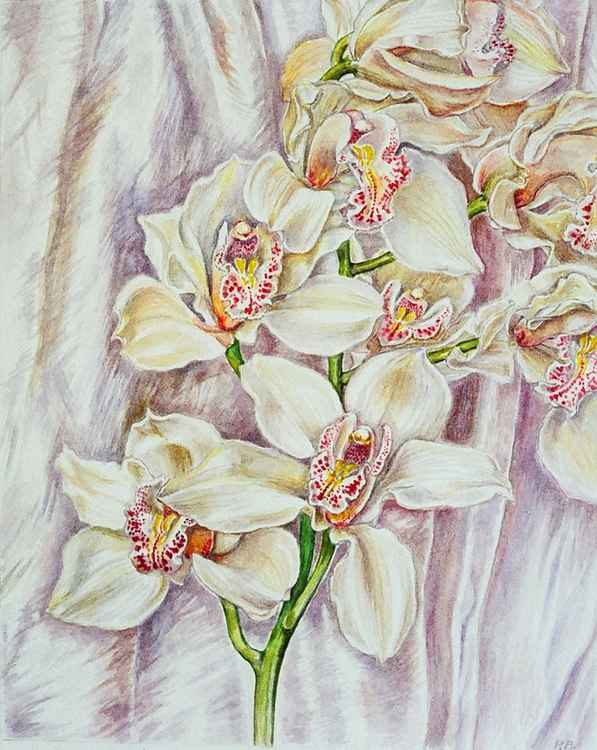 Orchids with silk -
