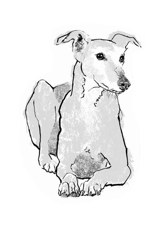Greyhound - Image 0
