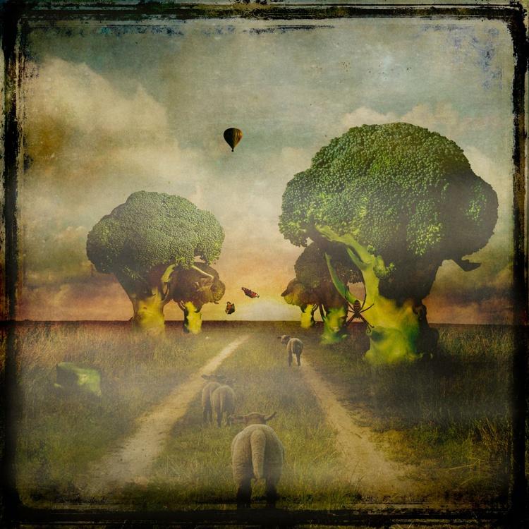 Broccoli Lane - Image 0