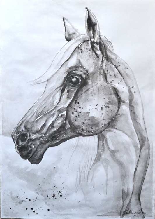 Flea-bitten gray horse - Image 0