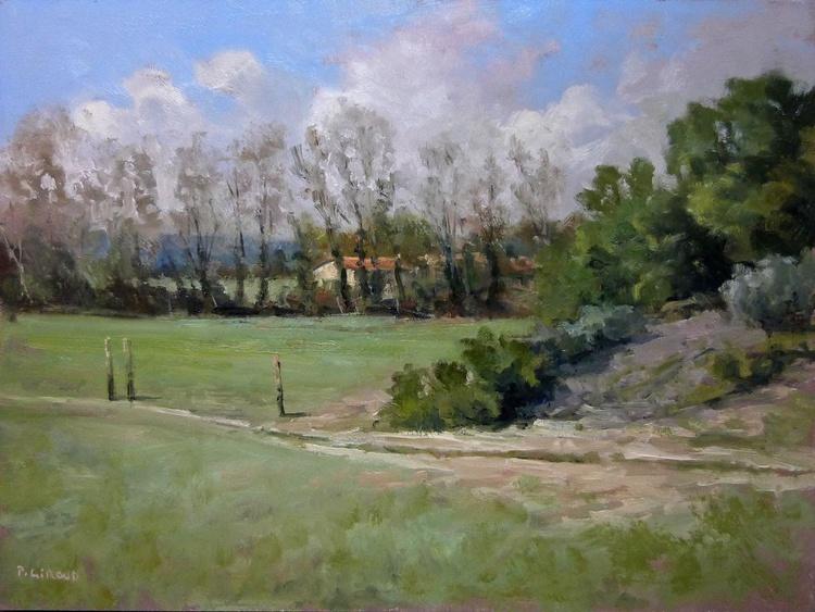 Poplars Hedge - Image 0