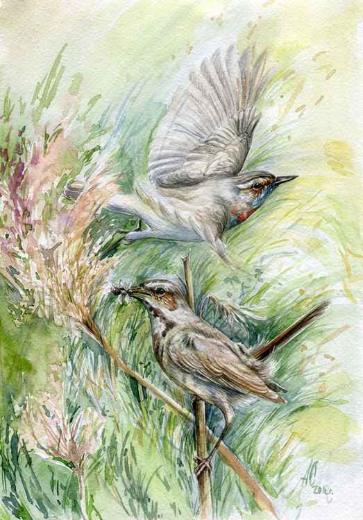 "Original watercolor ""Wind"" (Luscinia svecica) -"