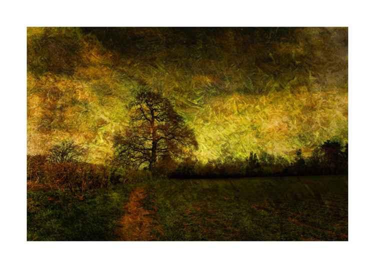 Stormy Tree -
