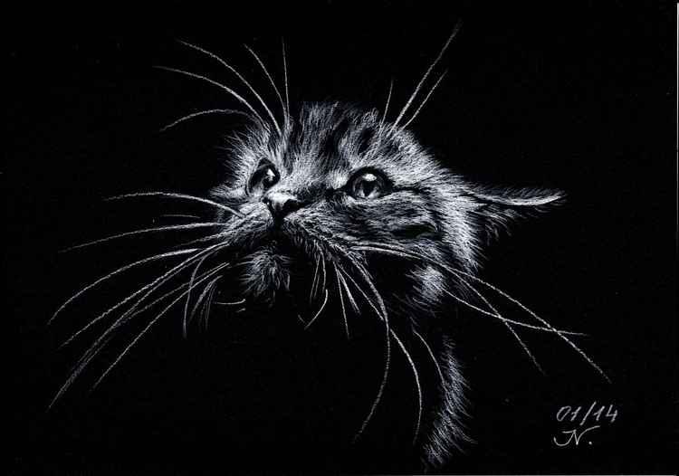 The Cat -
