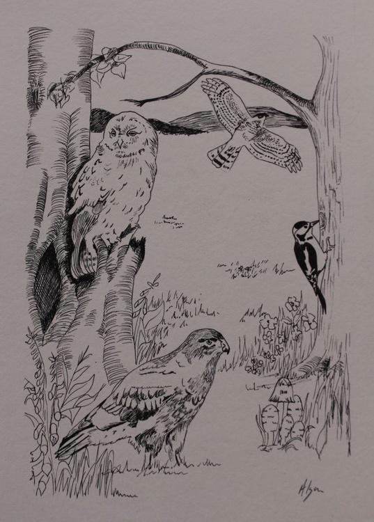 Woodland Birds - Image 0