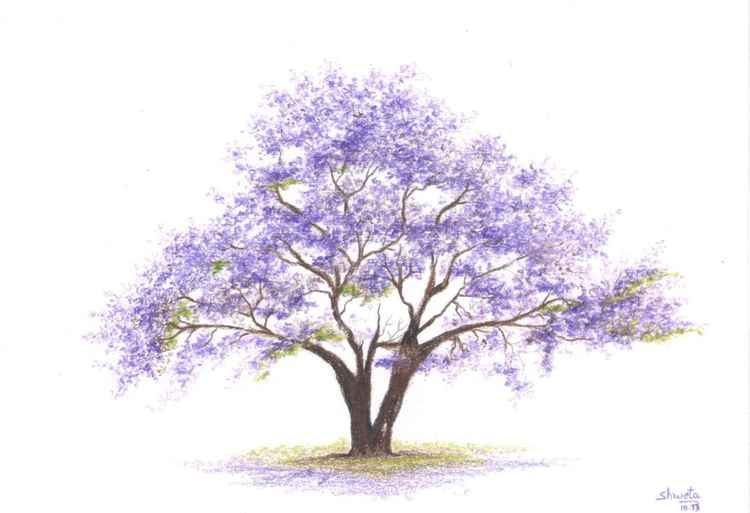 Jacaranda Tree colored pencil drawing