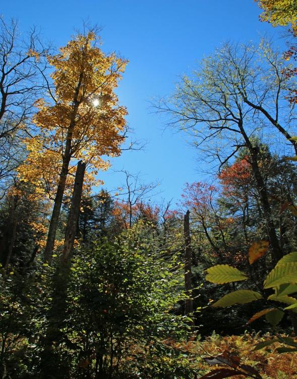 Beech tree in the  Fall  sun - Image 0