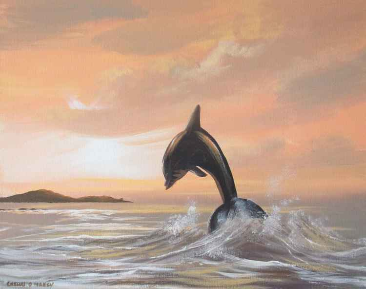 cruagh island dolphin -