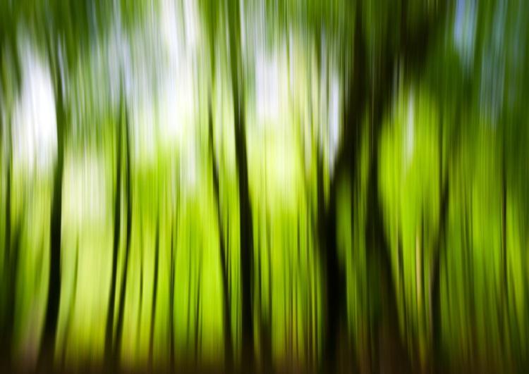 Beech Blur - Image 0