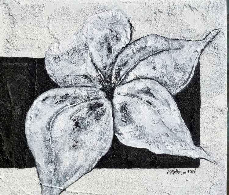 flower on Concrete 3 -