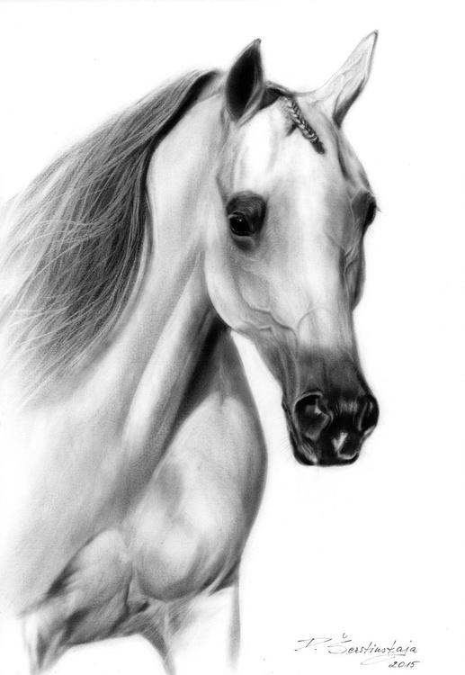 Arabian - Image 0
