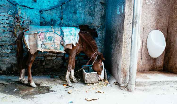Delhi Horse -