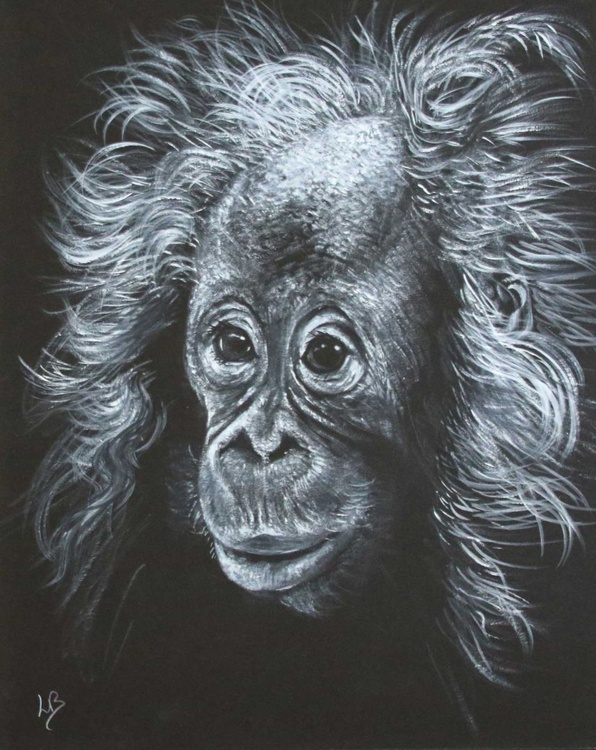 Bad Hair Day   (Orangutan) - Image 0