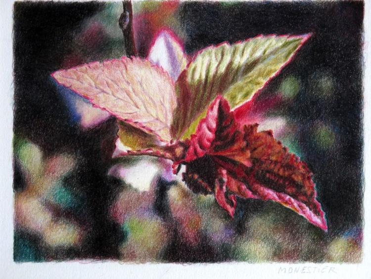 Foliage #2- coloured pencils - Image 0