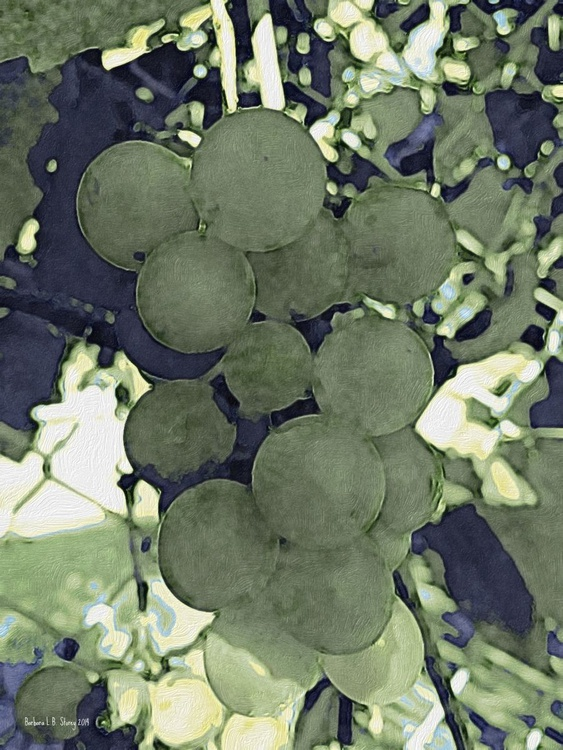 Green Grapes - 8x10 Nature Still Life - Image 0