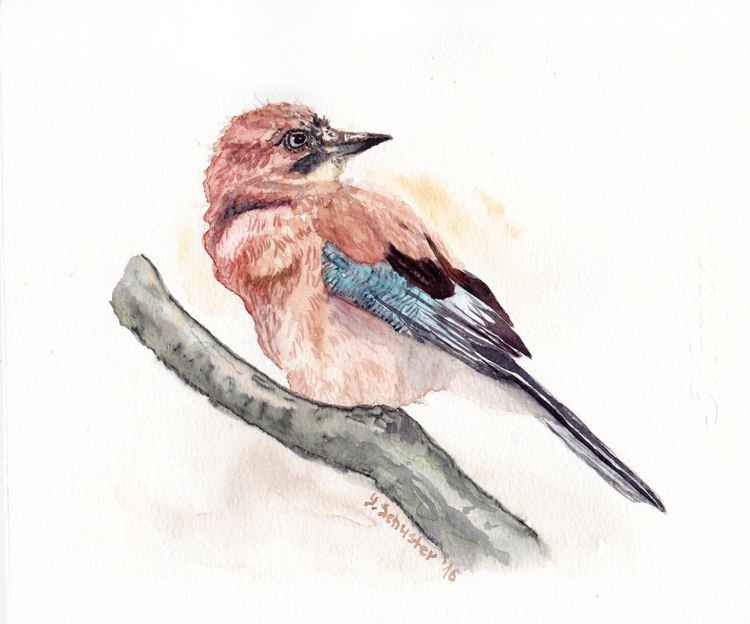 Watercolour birds portraits series.