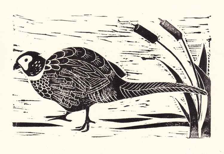 Pheasant in bulrush -