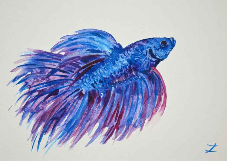 Royal Blue Betta Fish