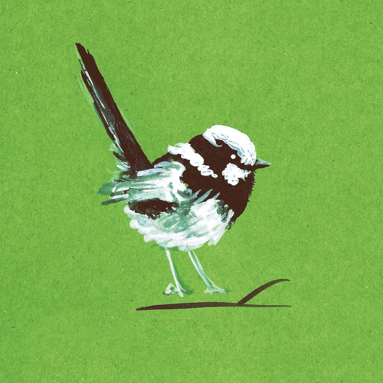 Fairy Wren ink drawing print on green - edition of 5 - Image 0