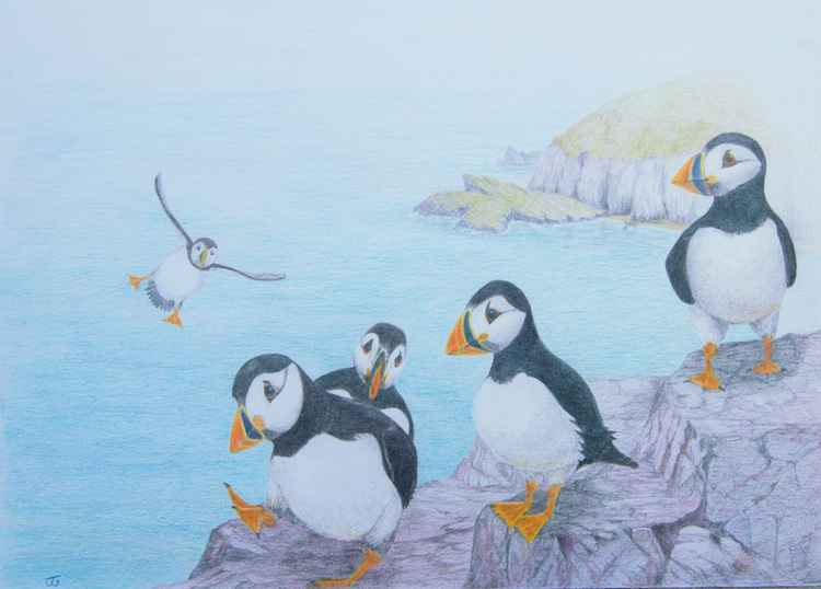 Puffins on Parade -