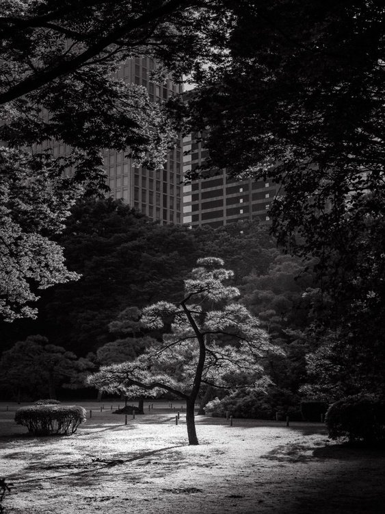 Tokyo Park, from the Japan Notebook. - Image 0
