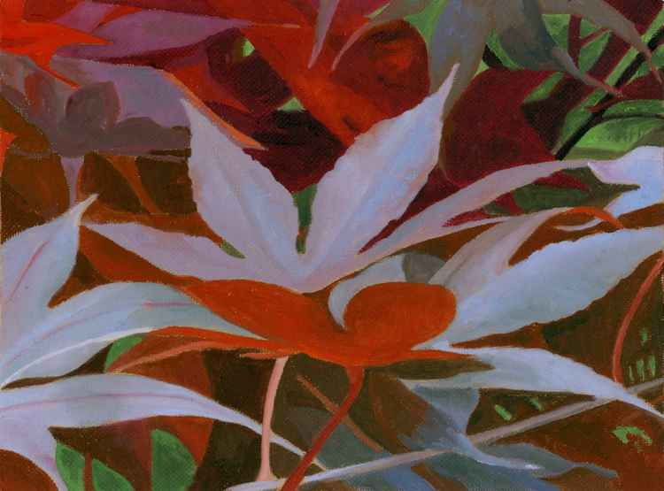 RED MAPLES -