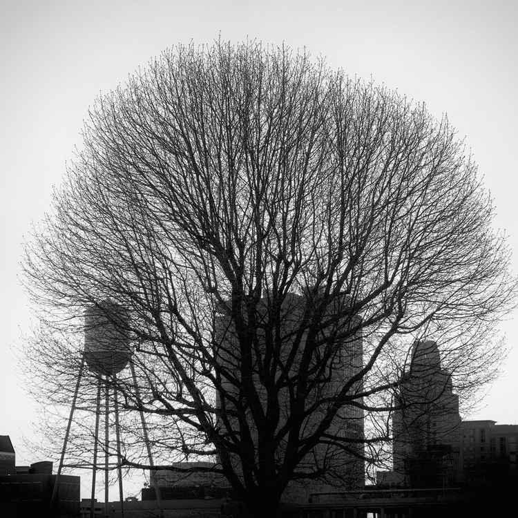City Tree -