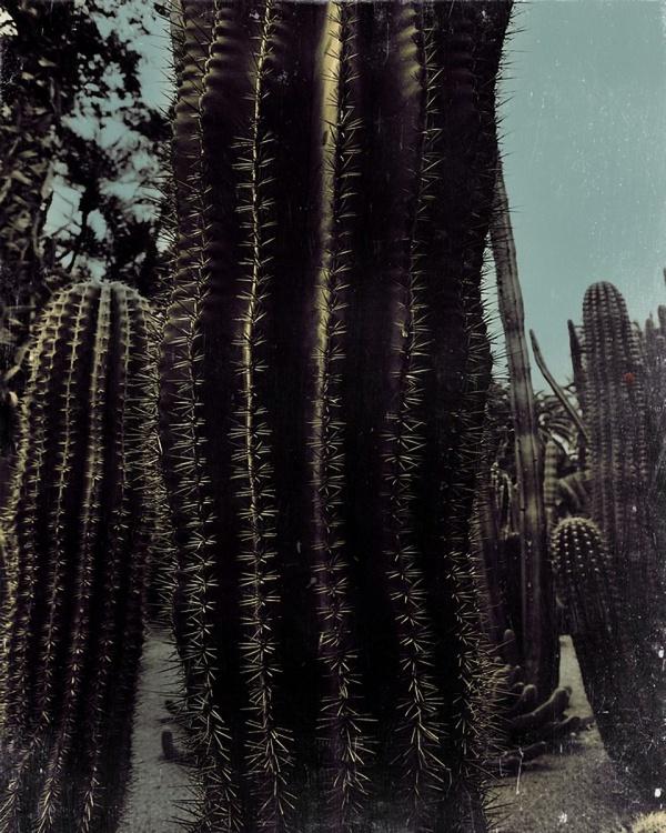 Cactus red - Image 0