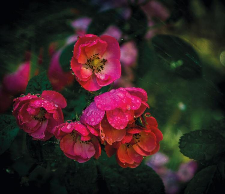 Flowers in water - Image 0