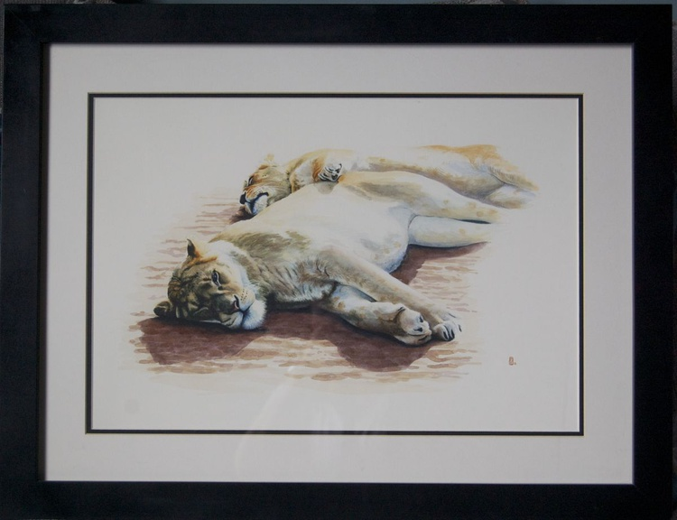 Lionesses Lounging - Image 0
