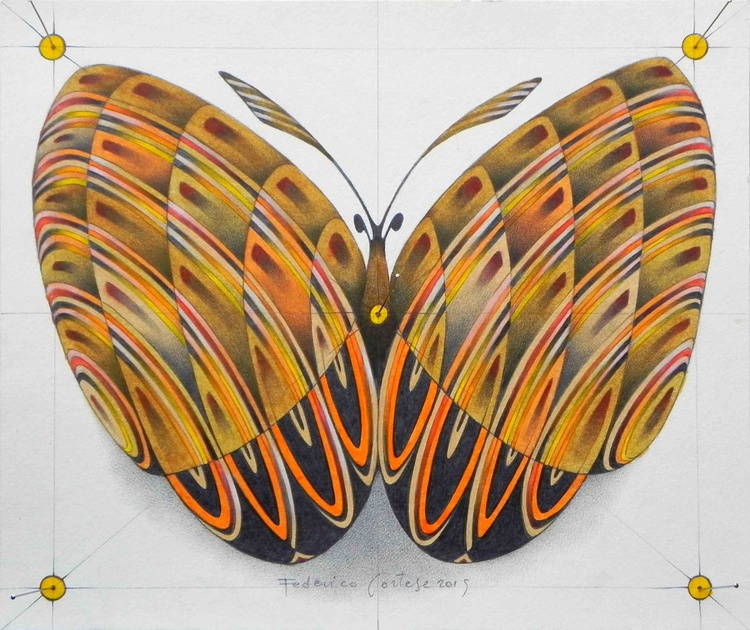 butterfly - Image 0