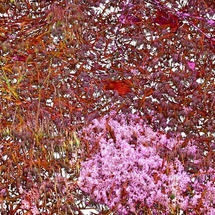 Pink Moss - Image 0