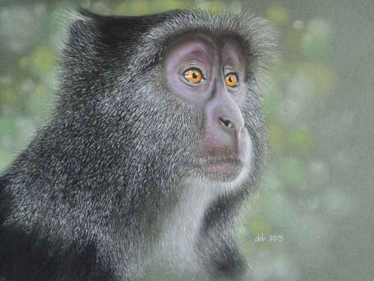 Blue Monkey -