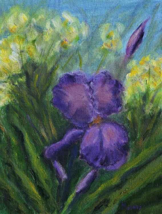 Purple Iris -