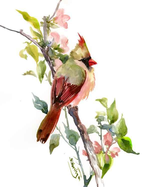 Cardinal And Tree Blossom -