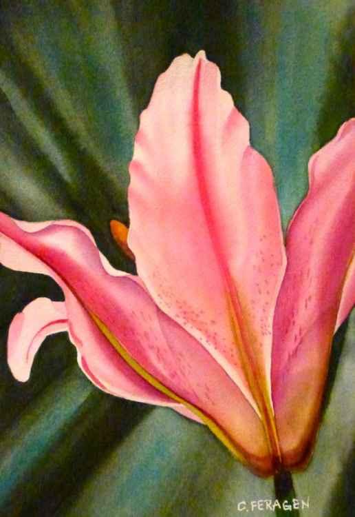 Pink Tulip -