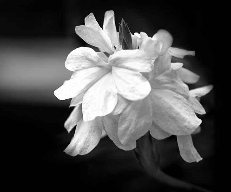 Orchid No. 1