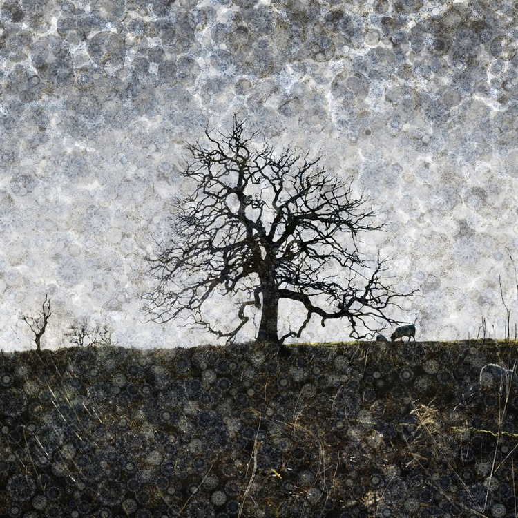 One Tree Hill (Ltd Edition of only 20 Fine Art Giclee Prints from original artwork.) - Image 0