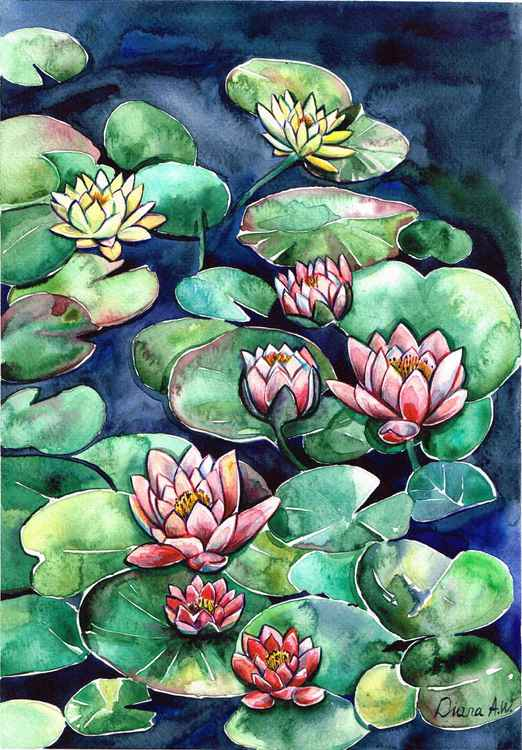 Waterlilies -