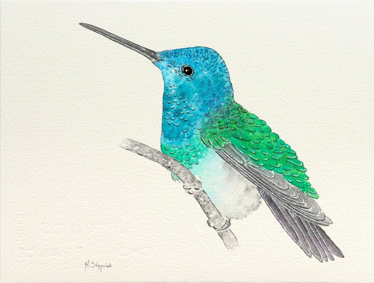 The hummingbird - Image 0
