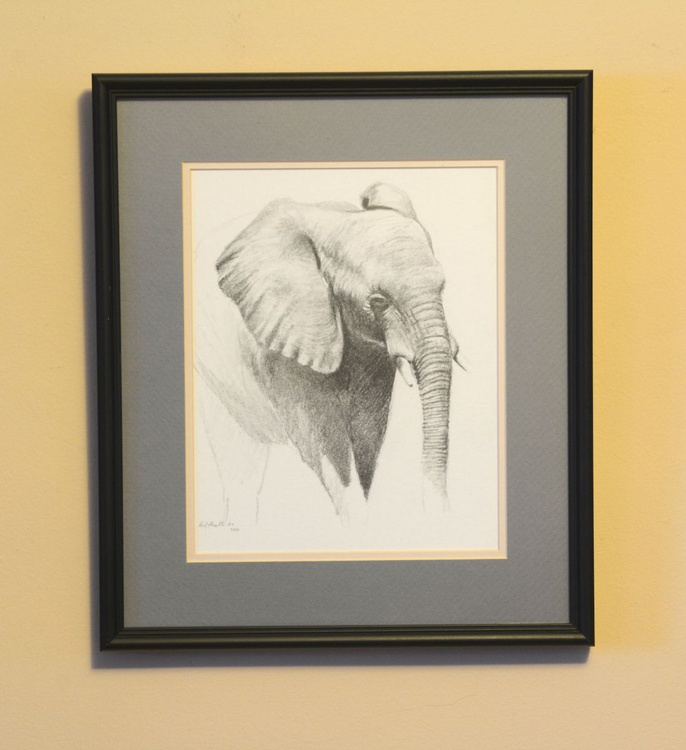 African Elephant sketch - Image 0