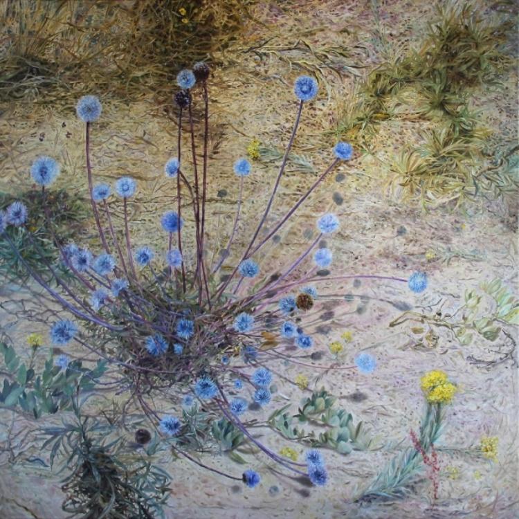 Plants of Sand Dunes - Image 0