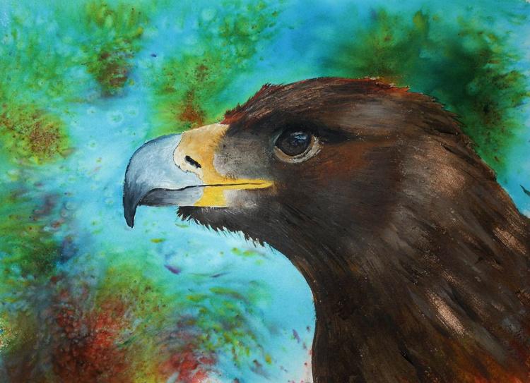 Eagle-eyed, framed study of an eagle - Image 0