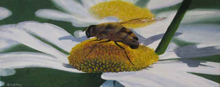 Marguerite and Honey Bee 50cm x 20cm -