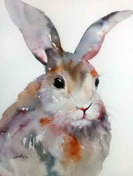 Gray Hare -