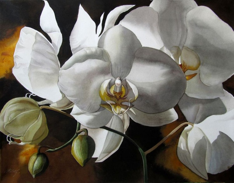White orchid - Image 0