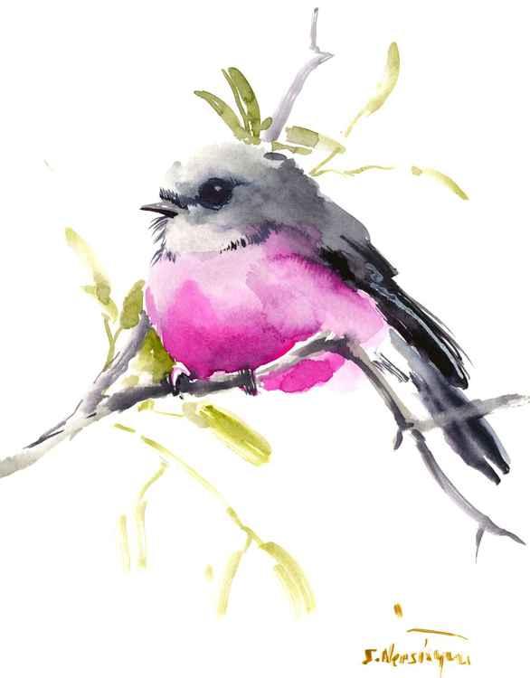 Pink Robin -